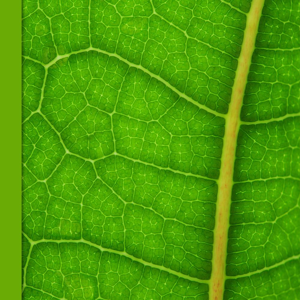 art pd - art and ecology environmental education