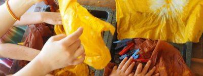 Small Schools Outcome: The Rainforest School