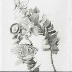 Mottlecah, Eucalyptus macrocarpa study by Jenny Gilbertson, 2020 - Queensland Regional Art Awards Entry, 2020